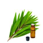 Tea Tree Oil 03